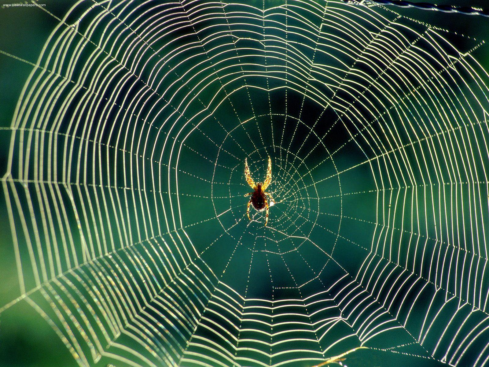 Avoid 'Charlotte's Web' to treat epilepsy
